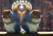 Shirley is squirrelly for chipmunks! / by Shirley DeChenne