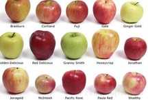 Diff. Apples / by Donna Phillip-Miller