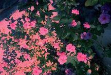 Florals / Floral inspiration for design.