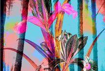 Tropicana / All things tropical