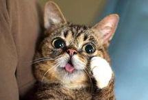 Lil Bub / by Shirley DeChenne