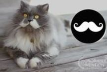 Owlbert, the mustache cat / by Shirley DeChenne