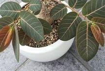 Botany_Plants