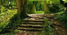 Landscape_Forest