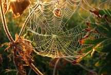 Misc_Spidernet