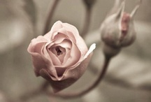 soft / by Suzanne Hegstrom