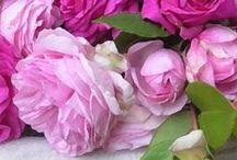 Roses / by liv wilhelmsen