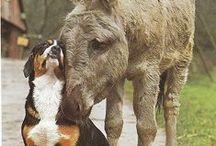 Beautiful Animals / Love them all