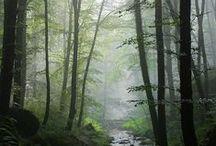les a příroda