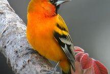 ptactvo..volně žijící