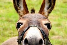 Beautiful Donkeys