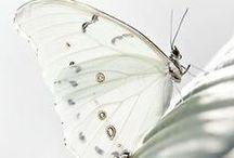 Motýl..vážka ..a jiné