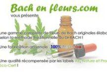Bach en Fleurs / Conseil et vente en ligne de Fleurs de Bach originales