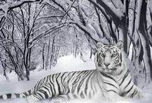 Winter White! / Winter Scenes