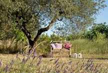 Relax tra gli ulivi / A farmhouse in the Maremma with forefront solutions and traditional materials.