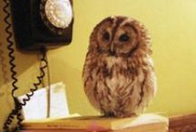 owl=love
