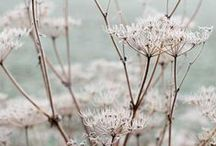 Seasons ✿ Winter