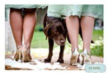 Furry Friends / Pets at weddings