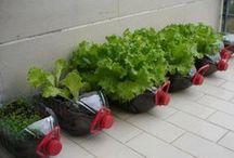 Diy Garden / Crear mi jardin con buenas ideas / by Pallets - Reciclaje