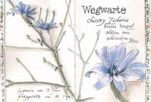 Botanical Art - eigene Arbeiten