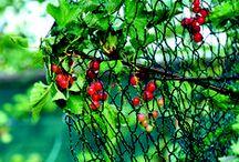 Vogelschutznetze / hochwertige Vogelschutznetze in verschiedenen Ausführungen