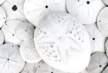 Shells / by room N°7