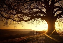 Trees / by Valerie Manseau