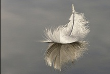 Feathers / by Valerie Manseau
