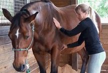 Equine Massage & Acupressure