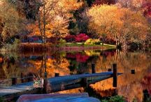 Autumn Mornings, Colorful Leaves, Crisp Air / All things fall - the best time of year! / by Jackie Dilworth