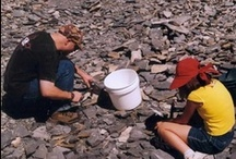 Rockhound--Looking for rocks and gems / by Phyllis Tucker