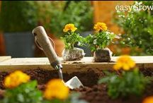 easyGrow™ / Introducing easyGrow™; B&Q's simple solution to a beautiful garden. / by B&Q