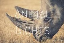>>Animal Rights / Animal rights in an important issue - whether it is choosing not to ride an elephant in Thailand, or choosing products that haven't been tested on animals, there is a lot we can do to make a difference.