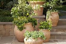 Mediterranean gardens / Mediterranean influenced gardens and landscaping inspiration, potted citrus and flowers in urns and decorative containers.   If you are not following, please limit repins to 10 a day per board.