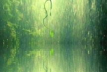 Nature / by Crisu Manuela