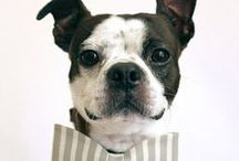 Dogs with Style / Fashion forward pooches who like to get noticed.