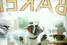 Funny Dogs / Dogs who put a smile on our faces.  Comic relief, anyone?