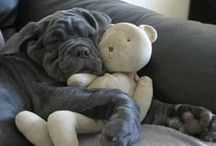Dog Cuteness / These pups are so adorable we can't help but say awwwww....