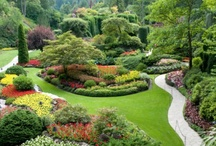 Flowers and Gardens / I have a separate board for roses. / by Kathleen Riley
