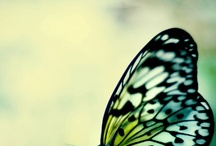 Butterflies / Mariposas