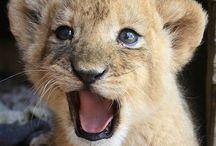 Animalista / Seres vivos que me apasionan! ❤️