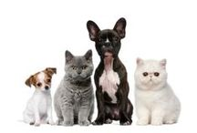 Life With Pets / Pets make a house a home. This board is dedicated to taking care of our furriest family members.