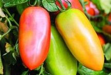 Grow Vegetables and Herbs at Home / Growing your own fresh vegetables and herbs is the best way to insure healthy eating for yourself and your family.