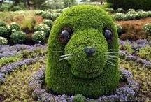 ◆ Topiaries ◆ / WE SHARE PINS ON PINTEREST NOT RAID ! PLEASE DO NOT OVER PIN . PINNING POLITELY IS APPRECIATED ! / by Sarva Mangala