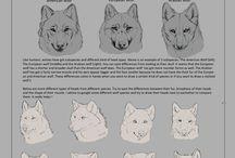 Drawing | Animals