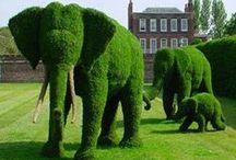 Art Flowers , Topiary