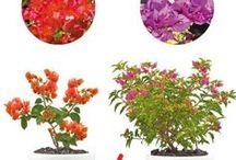 Colipays - Fleurs et plantes / Les colis de bouquets de fleurs et plantes exotiques  de La Réunion à offrir et livrer en France et en Europe