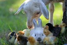 ANIMALS / Hayvanlar / by Mrr_A