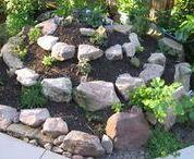 Gardening:  Herbs
