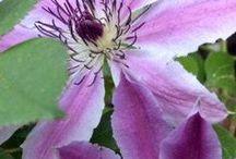Garden Love... / #gardenideas #landscaping #plants #pots #DIY #build #Howto #gardentips